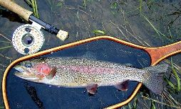 McKenzie rainbow / trout and steelhead fly fishing / McKenzie River fly fishing guide